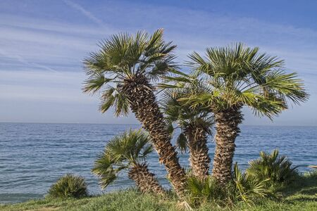pista: When driving on the Pista ciclabile Parco costiero between San Lorenzo and San Remo, you can admire the magnificent subtropical vegetation