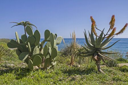 pista: When driving on the Pista ciclabile Parco costiero between San Lorenzo and San Remo you can enjoy these magnificent views of the coast and the exotic plants Stock Photo
