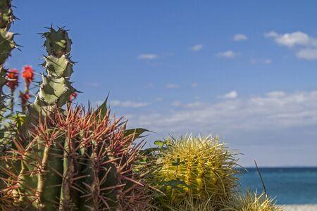 splendor: Cacti splendor on the Mediterranean coast at Bordighera