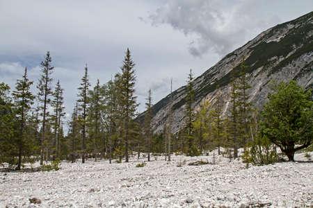 Hintergrund: In dieser Steinwüste ist jeder Baum dem langsamen Baumsterben geweiht