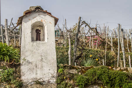 piety: Small shrine surrounded by vineyards in the Ligurian hinterland