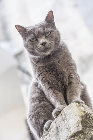 gray cat: Gray cat in an Italian village
