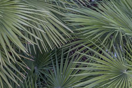 splendor: Wallpapers - Palm splendor on the Riviera