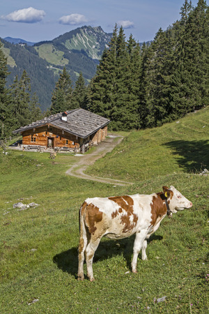 overnight stay: Lower Wildfeldalm - idyllic mountain lodge at you pass the increase to Rotwand summit Editorial