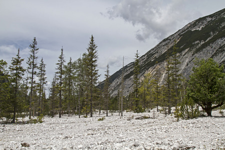 rockslide: In this stony desert every tree is doomed to slow dying tree Stock Photo