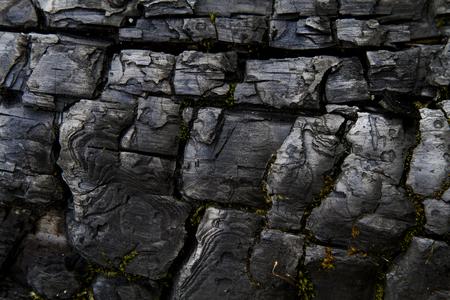 quemado: Los rastros de la quema en la corteza de un tronco de árbol viejo carbonizado