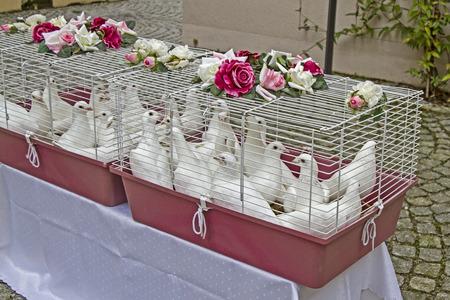 symbolically: White wedding doves waiting for the wedding couple