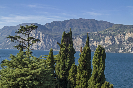 cedars: Mediterranean vegetation on Lake Garda