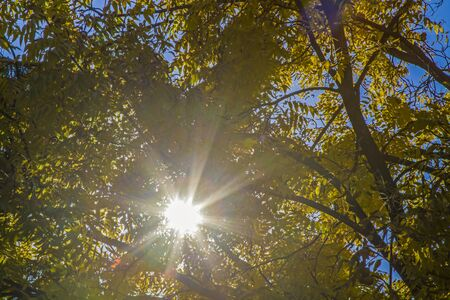 canopy: Sun shines through yellow-colored canopy Stock Photo