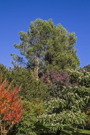 subtropical: Park in Arco with subtropical vegetation