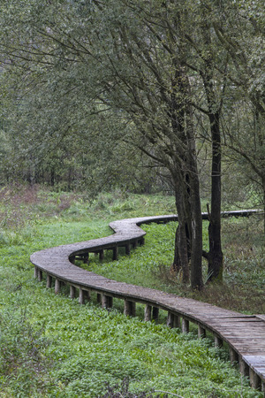 biotope: Dry ground can be reached by means of wooden walkways through the idyllic biotope at Lake Terlago