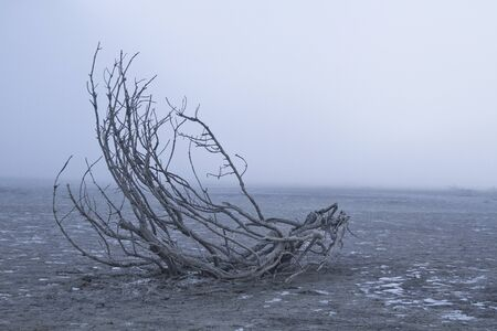 drained: Tree fragment - impressive natural spectacle in drained reservoir Sylvenstein in southern Upper Bavaria