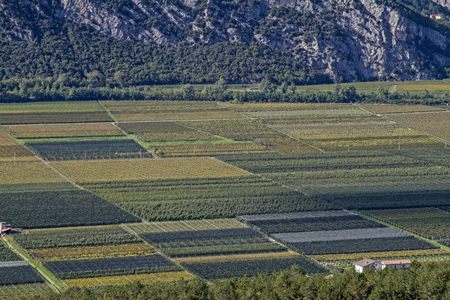 the fruitful: The fertile Sarca Valley a center for agricultural use Stock Photo