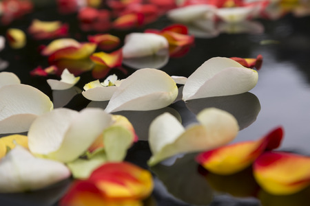 transience: Bridal Impressions - flower carpet from colored fallen rose petals on a black wedding car Stock Photo