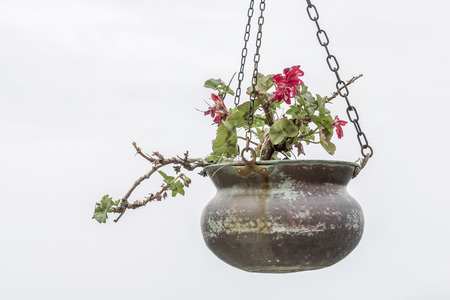 hanging basket: Free Hanging Basket with wilted geraniums in autumn against gray sky