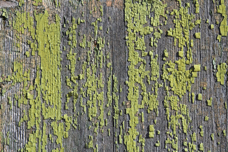 verdigris: Old wooden wall with moss and algae