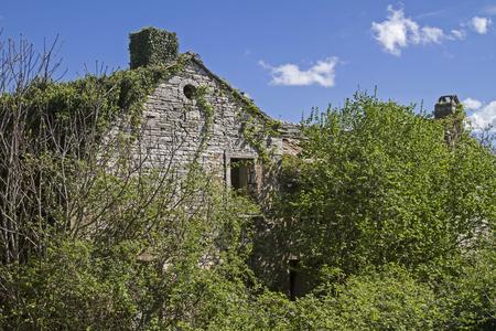 expire: Abandoned and dilapidated houses idyllic overgrown with plants characterize the idyllic landscape