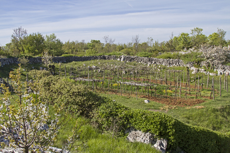 Fertile fields amid the rocky karst  on the peninsula Koromacno in  Istria