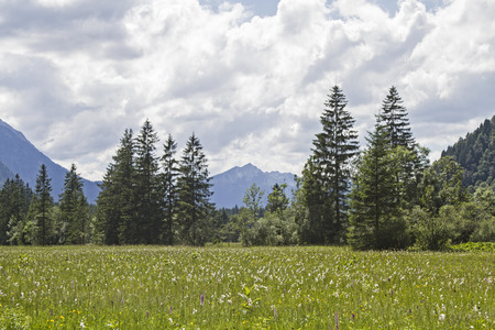 turba: El Ammer que fluye en el valle Graswang a través de un páramo idílica llamada Ettal Weidmoos