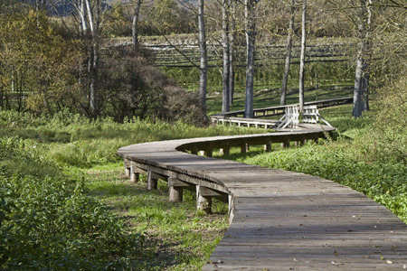 biotope: You can reach  dry foot by means of wooden bridges through the idyllic biotope on the Terlago lake