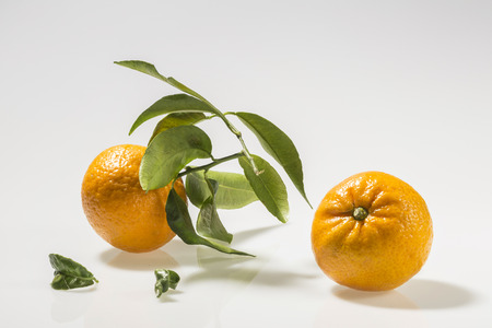 Freshly picked tangerines with foliage Reklamní fotografie