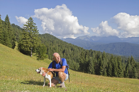 itinerant: Older Beagle and itinerant Senior enjoy nature at a short rest