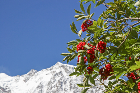 Red grape-picker in front of the mighty east wall of Monte Rosa