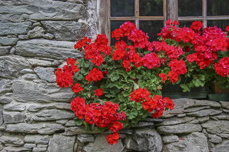 La fenêtre au sous-sol d'une ancienne maison Walser Banque d'images - 70613686