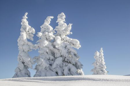 alpen: A fantastic winter day in the Bavarian Alps - snowy trees on a ski tour to the Hirschberg