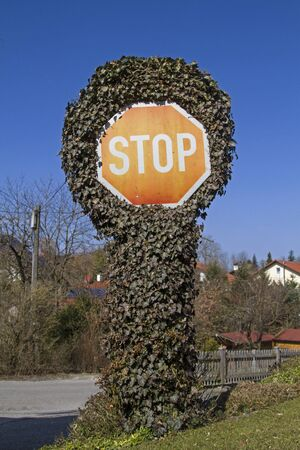 overpowered: A stop sign with a rampant ivy