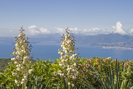 Overlooking the southern Gardasee- in the foreground a thriving candles Yucca