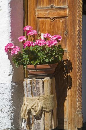 Flowering geraniums in flowers pot - Still life outside the door