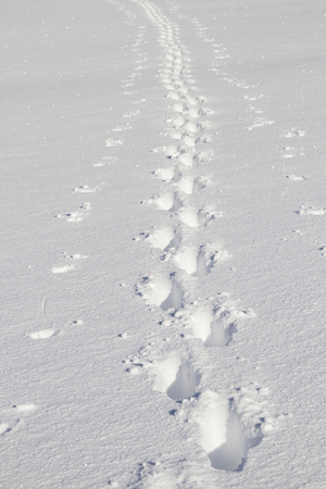 With the help of ski poles, a single hiker sped through the untouched deep snow