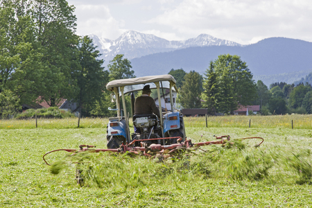 Farmer with old tractor and hay tedder in a meadow at the hay harvest Фото со стока
