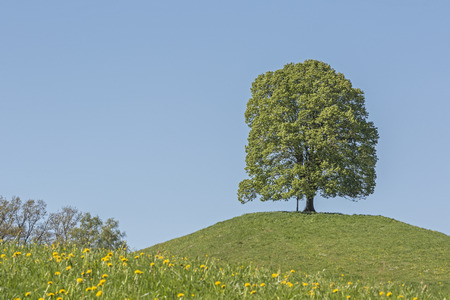 A single standing deciduous tree on the moraine hills of Veiglberges amid the beautiful foothills of the Alps of the Toelz district Stock Photo
