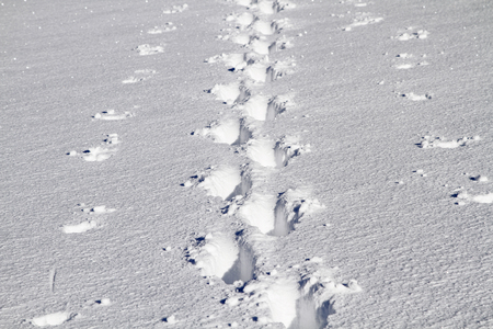 With the help of ski poles, a single hiker sped through the untouched deep snow Standard-Bild - 95190519