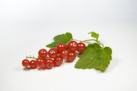 Red currants - decorative berry fruit on white background