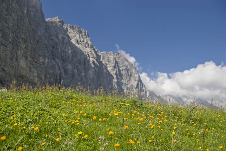 Flower meadow on the Hohljoch with the impressive walls of the Lalidererwand Standard-Bild - 95761384