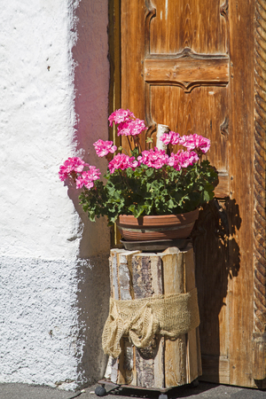 Flowering geraniums in flowers pot - Still life outside the door