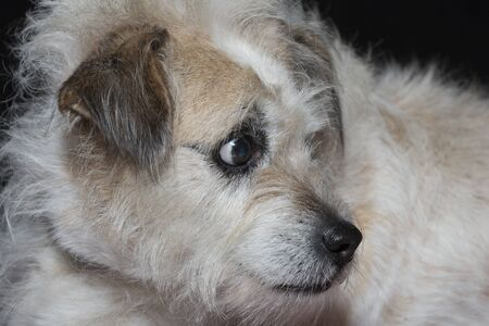 Portrait of a mixed breed dog in the studio in front of black background
