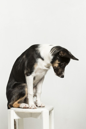 Exercises that promote the discipline, coordination and concentration of a young border collie
