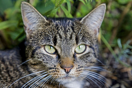 Perfect camouflage dress of a tabby domestic cat