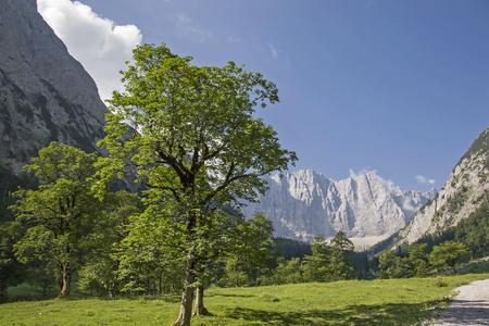 Prächtiger Ahornbaum im Sommer mit den Gipfeln der Karwendelgebirge Stock Photo