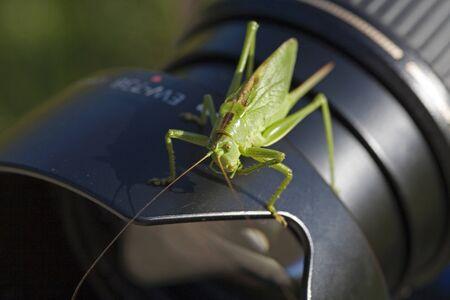 Green grasshopper on lens of a reflex camera