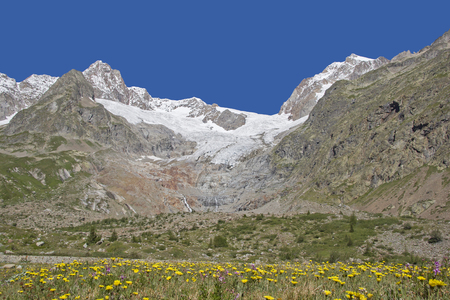 Magnificent flower meadow in the idyllic Val Veny at the foot of Monte Biancos Stock Photo