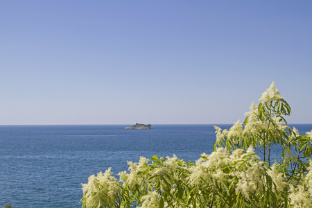 Flowering rowan tree in front of the blue water surface of the Istrian Adriatic Stock Photo