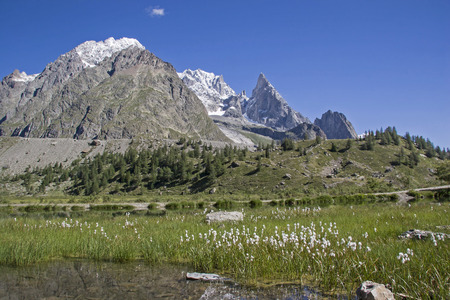 Magnificent moor meadow with white cotton grass in the idyllic Val Veny at the foot of Monte Biancos