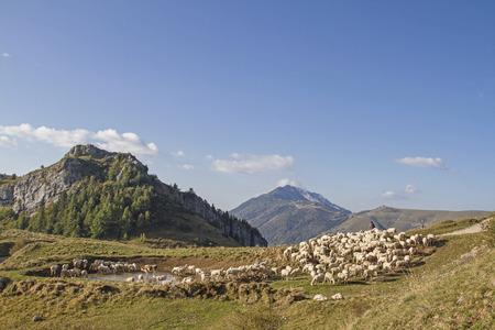 Kudde schapen met herder grazen op het plateau van het Monte Baldo gebied Stockfoto