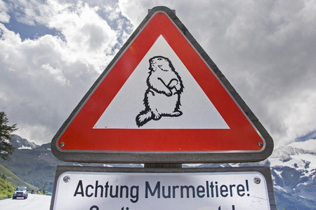 This road sign warns motorists of marmots that surprisingly cross the road Фото со стока