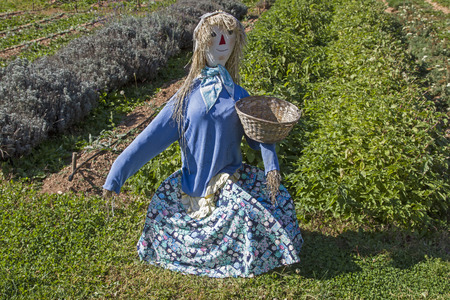 The guardian in the herb garden - scarecrow is to fend off unwanted animal visitors